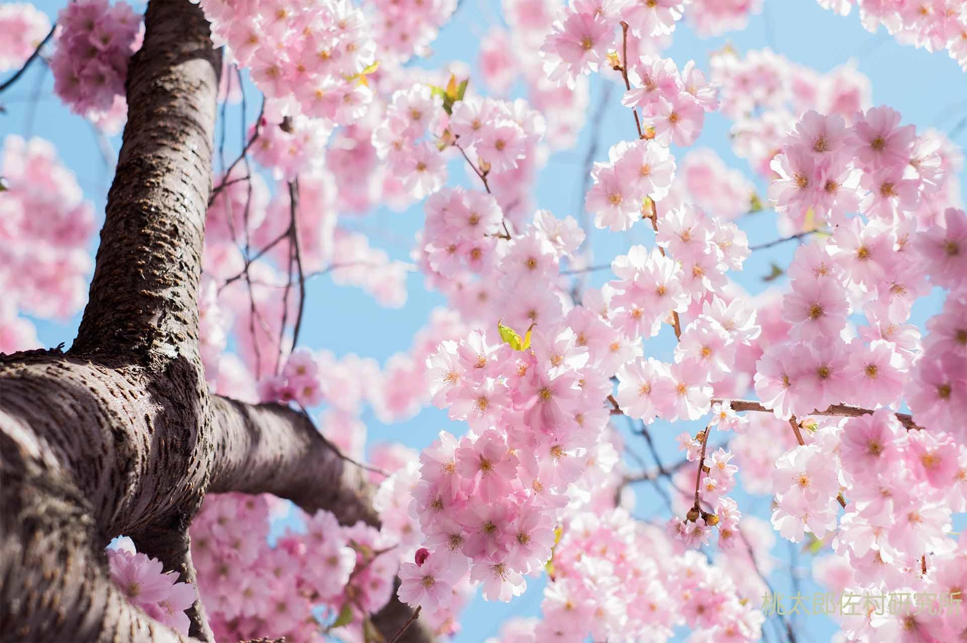 岡山の花見名所
